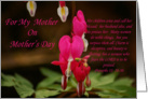 Happy Mother's Day : bleeding heart card