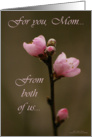 Mother's Day from couple: Nectarine blossoms card