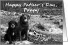 Happy Father's Day, Poppy: two dogs card