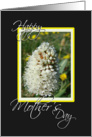White mountain wildflower card