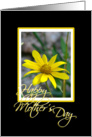 Yellow Daisy card