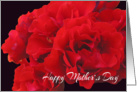 Happy Mother&rsquo;s Day - Red Roses card