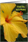 iFeliz Da de la Madre - Spanish Mother&rsquo;s Day Card