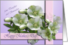From Daughter and son-in-law, Happy Mother&rsquo;s Day Card - Hellebores card