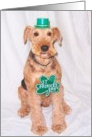 St. Patrick's Day Dog card