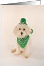 St. Patricks Day Dog card