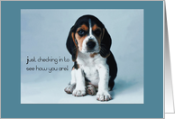 Thinking of You, Dog, Beagle Puppy card