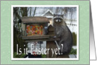 Easter Jelly Bean Raccoon card