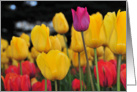 Tulips - You are Different card