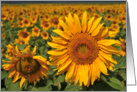 You Are the Sunflower of My Life card