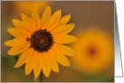 Ladybug Sunflower card