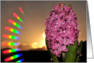 Rainbow Hyacinth card