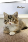 Thank you with a kitten card