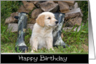 golden retriever-birthday card