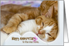 anniversary-cat-love card