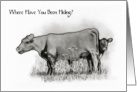 I Miss You: Where Have You Been Hiding? Calf Peeks Behind Cow card