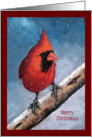 Merry Christmas, General, Red Cardinal Bird, Snowflakes, Original Art card