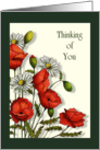 Thinking of You, General, Poppies and Daisies, Original Art card