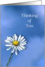 Thinking of You, General, Single Daisy on Blue Background, Art card