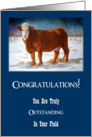 Congratulations: Outstanding in Field, Promotion: Funny, Beef Cow card