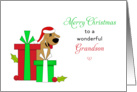 For Grandson Christmas Card-Brown Dog-Santa Hat-Christmas Presents card