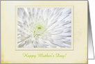 Chrysanthemum, Happy Mothers Day! Greeting Card