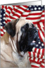 Fawn Mastiff & flag card