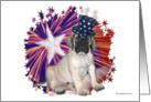 Patriotic Mastiff Pup & Star card