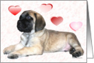 Mastiff pup with hearts card