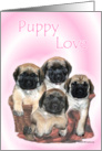 Mastiff pups in basket card