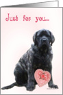 Brindle Mastiff pup with pink heart card