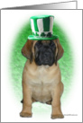 Mastiff puppy with Irish tophat card