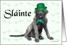 Brindle Mastiff puppy Slainte card