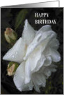Rainkissed Rose - Birthday Card