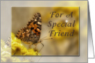 For a Special Friend, Butterfly card