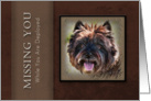 Missing You While You Are Deployed, Brown Dog on Brown Background card