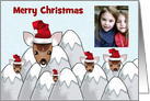 Christmas photo card with reindeers in santa hats funny humor card