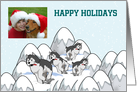 Christmas photo card with huskies on snowy mountains snow dogs card