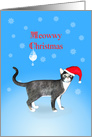 Meowwy Christmas cat in a hat. card