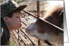 Happy Anniversary - Horse kiss card