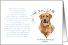 Paw Prints On Your Heart Pet Sympathy custom photo card