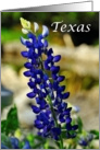 Beautiful Texas Bluebonnet State Specific Blank Inside Notecard card