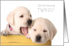 Pregnant with Twins Congratulations Cute Puppies card