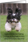 Shih-Tzu Puppy Happy Easter Humorous card
