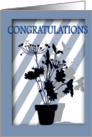 CONGRATULATIONS Blue Window with Blue Geraniums card