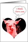 hi-fi llama : i love you card