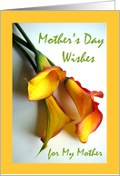 Mother's Day Wishes for Estranged Mom, Mango Colored Calla Lilies card