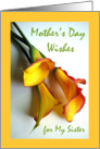 Mother's Day Wishes for Sister, Mango Colored Calla Lilies card