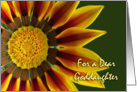 Name Day for Goddaughter, Gazania Flower Up Close card