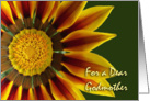 Nurses Day for Godmother, Gazania Flower Up Close card